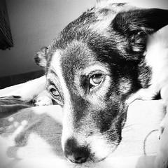 Jacob (rociobguerrera) Tags: dog love animal jacob bn perro sight mirada