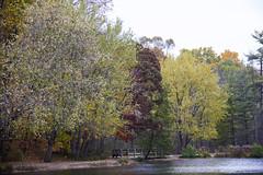 Pallet of fall (Juan Cardama) Tags: fall niagara colorsoffall thorold niagararegion
