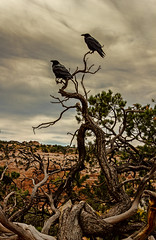 Canyonlands National Park (Katrina Fries) Tags: nature landscape utah nationalpark canyonlands