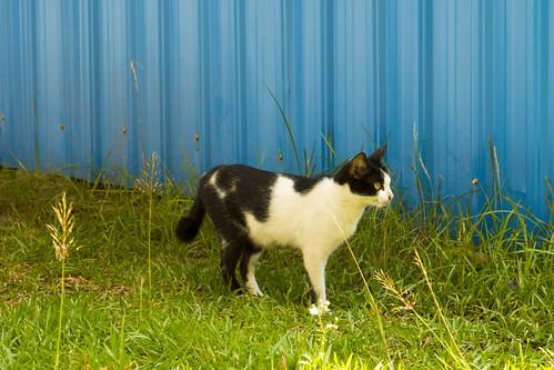 Tuol Sleng Cat