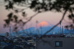 Peep red Fuji through tree  (DigiPub) Tags: morning red mounta