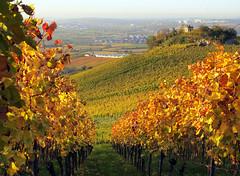Belvedere in Autumn Vineyard (Habub3) Tags: autumn canon germany deutschland vineyard powershot belvedere g12 2014 weinstadt habub3