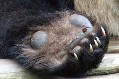 1476 (Jasper Kyodaina) Tags: man guy feet fetish giant foot paw nail claw squish sole crush giantess trample esmagar