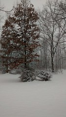 Winter 2014 (amberrenee61414) Tags: trees winter snow cold color night dark naked