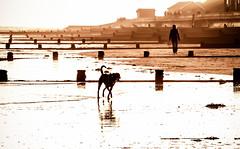 Frinton :-) (Ruth S Hart) Tags: dog reflection beach walking scene frintononsea nikon70200mm nikond300 ©ruthshart