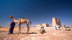 Dakka Temple (m1ke_a) Tags: temple sand desert nile camel ancientegypt lakenasser dakka wadialsabua