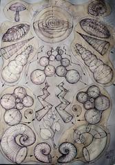 Concentric-Linear-Helix Algorithm (kelemengabi) Tags: animal spiral pattern shell biosphere sphere helix universal concentric algorithm vegetal chiton trilobite tilia kelemengabi gabrielkelemen