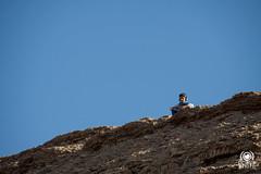 Vedetta (andrea.prave) Tags: guy unesco morocco maroc marocco ouarzazate ksar watcher kasbah aitbenhaddou  atbenhaddou vedetta almamlaka    visitmorocco almaghribiyya asifounila  tourdelmarocco