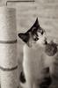 punching-ball (susodediego ) Tags: cat chat bn gato katze soe autofocus lúa greatphotographers frameit simplysuperb gününeniyisi olétusfotos hellopussycat rememberthatmomentlevel1 magicmomentsinyourlife magicmomentsinyourlifelevel2 vpul01