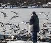 12-6-14: Feast (Eleanor Lang) Tags: seagulls brooklyn prospectpark feedingthebirds december2014 eleanorlang