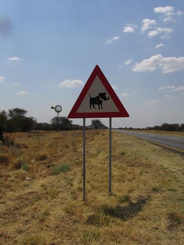 Gare aux phacochères, Namibie
