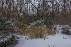 Vale of Cashmere in winter (4 of 5) (hfrankmann) Tags: snow brooklyn vale winter2015 parospectpark
