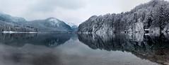 trees winter white lake snow mountains alps water reflections bayern bavaria mirror see spiegel calm füssen alpsee
