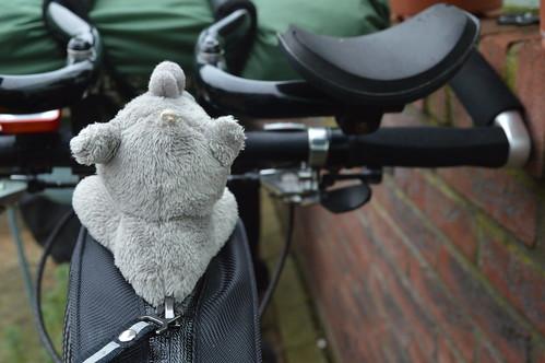 Ringo on the bike