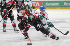 """DEL15 Kšlner Haie vs. Augsburg Panthers • <a style=""""font-size:0.8em;"""" href=""""http://www.flickr.com/photos/64442770@N03/16300498051/"""" target=""""_blank"""">View on Flickr</a>"""