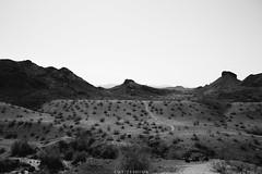 5R6K2472 (ATeshima) Tags: arizona nature havasu