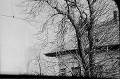 Romania (Valentina Gai) Tags: trees blackandwhite bw white house black tree film analog kodak places ishootfilm romania biancoenero 2016 2015 analogico tx400