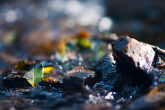 Flowing Water (Elliot Tratt) Tags: wild nature water leaves stone closeup digital canon river landscape eos leaf close natural stones wildlife rivers waters 2016 400d