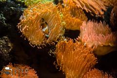 5D__5337 (Steofoto) Tags: genova porto pesci acquario darsena crostacei rettili cetacei molluschi