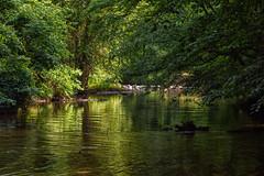 Whitewater Creek (Maggggie) Tags: green water creek georgia lush fayetteville whitewatercreek 52in2016