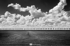Beemster BW (Stuart Dayus) Tags: trees blackandwhite holland field june clouds pattern thenetherlands farmland line queue 2015