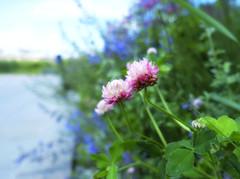 Field flowers in the city (Varvara_R) Tags: flowers summer fleur blumen summertime clover klee sonyrx100m3