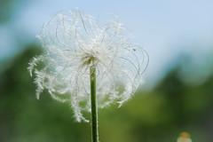 Flower (kissmuch) Tags: flower macro nature  xt1 xf60mm