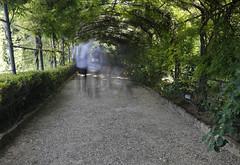 Bardini Gardens (ramislevy) Tags: longexposure italy garden florence simone canopy wisteria ghosting