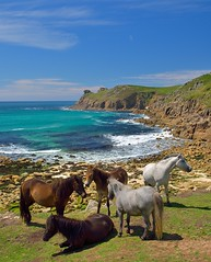 Ponies At Nanjizal Cove, Cornwall, UK (Rickety Rob) Tags: uk sea tourism coast cornwall pony landsend ponies seashore millbay nanjizal