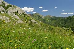 Los colores de Asturias (amajocu) Tags: espaa flores spain nikon asturias paisaje montaa d5100