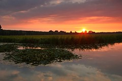 Serenity (M a u r i c e) Tags: sunset sky sun sunlight water netherlands sunshine reflections evening pond waterlily dusk polder efs1022mm