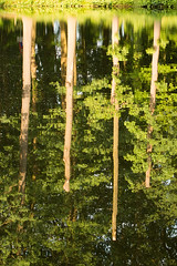 Go your own way (Enjoying Nature Moments) Tags: trees plants plant holland reflection tree nature netherlands dutch bomen flora nederland natuur boom planten reflectie spiegeling spiegelingen reflecties velp
