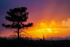 Colorado Sunset (BernieErnieJr) Tags: colorado sunset sonya6300 sony18105mmg frontrange greatphotographers teamsony rockymountains mulleinweeds ponderosapine