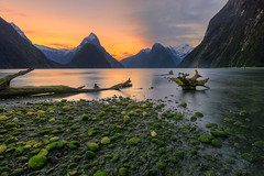 Driftwood (Reprocessed) (Arief Rasa) Tags: ocean park new travel blue light sunset sea newzealand sky mountain seascape reflection green tourism nature water beautiful spectacular landscape island bay moss scenery rocks ray branch view outdoor background south famous scenic peak landmark scene driftwood zealand national valley destination environment fjord milford milfordsound mitre fiord fiordland
