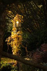 cincinnati-10.jpg (BA Payton) Tags: street light ohio lamp america nikon cincinnati dream vine narnia