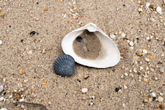 Long Branch, New Jersey (_jg_) Tags: ocean sea beach seashells newjersey sand unitedstates cloudy northamerica oceans atlanticocean seas longbranch