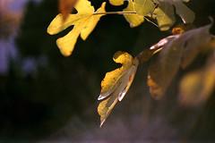 winter still life - 2 (manni39) Tags: stilllife film stillleben bokeh m42 58mm yashica helios yashicatlelectro helios44  m42mount paradiesfilm helios58mm20