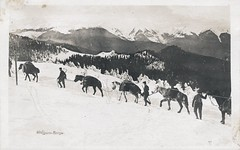Karpathen mule transport (Paranoid_Womb) Tags: soldier army war postcard wwi ak german weapon imperial soldiers ww1 1914 1915 greatwar 1917 1918 1916 weltkrieg
