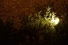 Gate Towers garden lamps (Mohamed_Abbas) Tags: nikon uae abu dhabi d7100