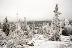Koli - Finland (Sami Niemeläinen (instagram: santtujns)) Tags: park winter snow nature forest trekking suomi finland landscape finnland hiking national lumi talvi maisema metsä finlandia kansallispuisto luonto karjala lieksa pielinen winderness retkeily pohjois patikointi