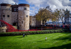 Tower Of London Poppies (JamesH83) Tags: world red london tower 1 blood war poppies rememberance lands swept moat seas