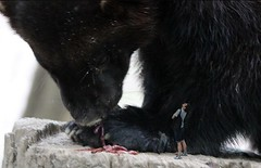 1467 (Jasper Kyodaina) Tags: man guy feet giant paw squish sole stomp crush giantess trample