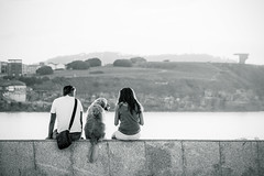 Familia (fertraban) Tags: sea love golden mar labrador pareja amor gijn asturias perro tres elogio xixn cantbrico