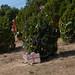 Trees_of_Loop_360_2014_098