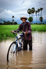 Wading Through the Flood (v2) (Trent's Pics) Tags: man green water bicycle palms cambodia flood palmtrees fields farmer ricefields fieldworker kampongchhnang
