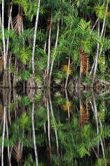 Amazon rainforest reflection - Ecuador. (estenard) Tags: reflection ecuador amazon