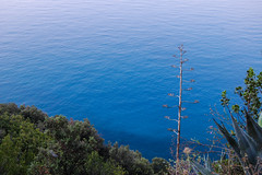 That Water! (Laura Sanderman) Tags: world park sea italy heritage site italian riviera italia liguria unescoworldheritagesite unesco national terre cinqueterre cinque liguriansea italianriviera ligurian cinqueterrenationalpark