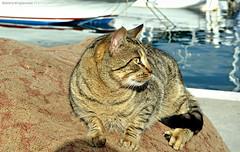 ... (Love me tender .**..*) Tags: sea cats colors animals greek photography greece dimitra floisvos palaiofaliro kirgiannaki