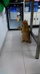 Mimo 19 (Asociacin Defensa Felina de Sevilla) Tags: espaa sevilla gatos felinos animales gatitos adoptar protectora adopciones apadrinar gatosurbanos defensafelina asociacindeanimales coloniasdegatos proteccindegatos activismoporlosanimales