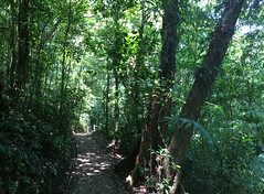 "La Réserve de Monteverde <a style=""margin-left:10px; font-size:0.8em;"" href=""http://www.flickr.com/photos/127723101@N04/26340747043/"" target=""_blank"">@flickr</a>"